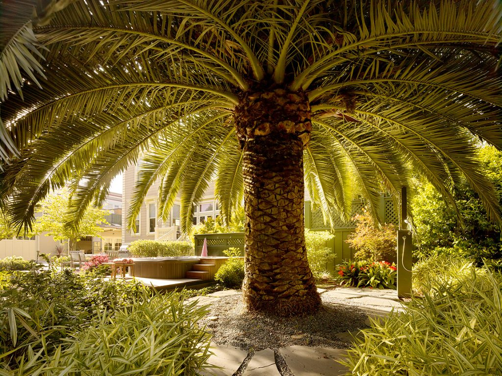Overhanging fronds of the date palms were lifted off the ground to allow in light and air.
