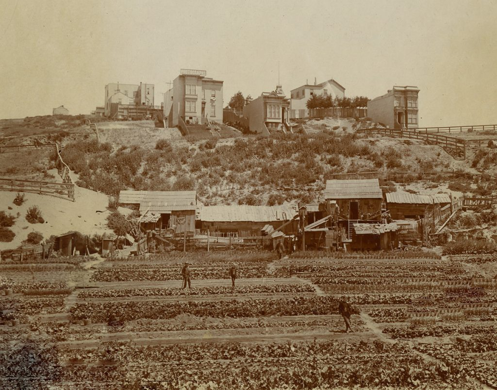Chinese vegetable gardens near the intersection of Union and Pierce Streets, circa 1888